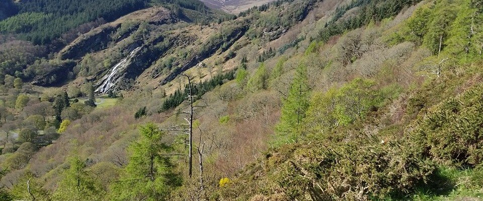Crone Woods & Djouce, Wicklow – 9, 14 or 18km